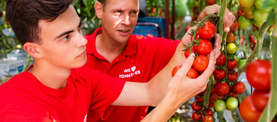 Prominent Tomaten_HROffice